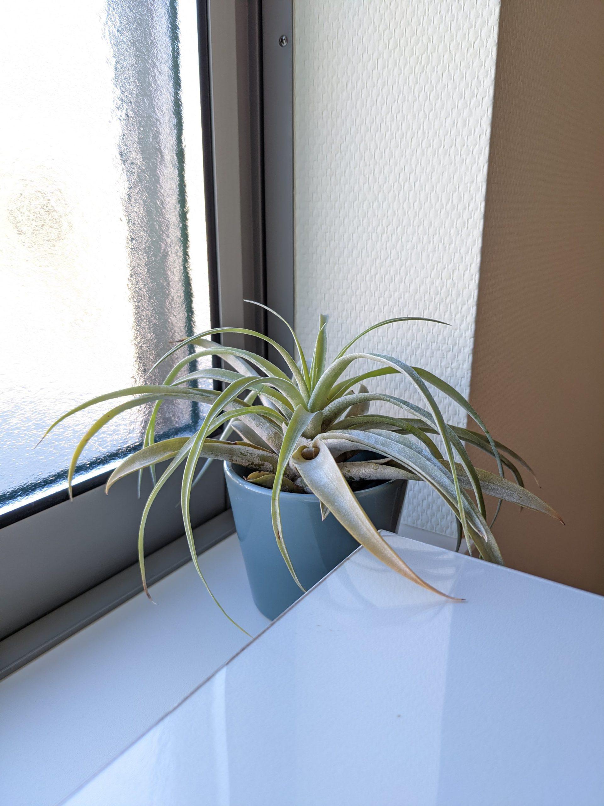 デスクの隣の観葉植物